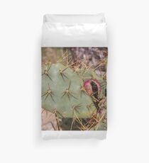 Opuntia prickly pear cactus with thorns and fruits, prickly close up Duvet Cover
