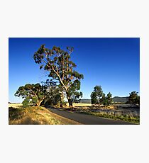 Country road near Newham Photographic Print