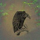Vulture by David Dehner
