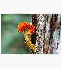 Fungi Season 7 Poster