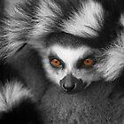 Ring-Tailed Lemur by rawshutterbug