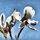 Jazzed Up Magnolia Flowers........... by lynn carter