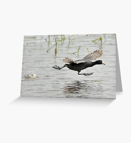 Coot Scoot Greeting Card