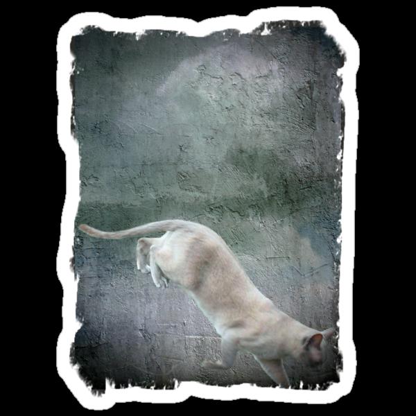 Alley Cat by missmoneypenny