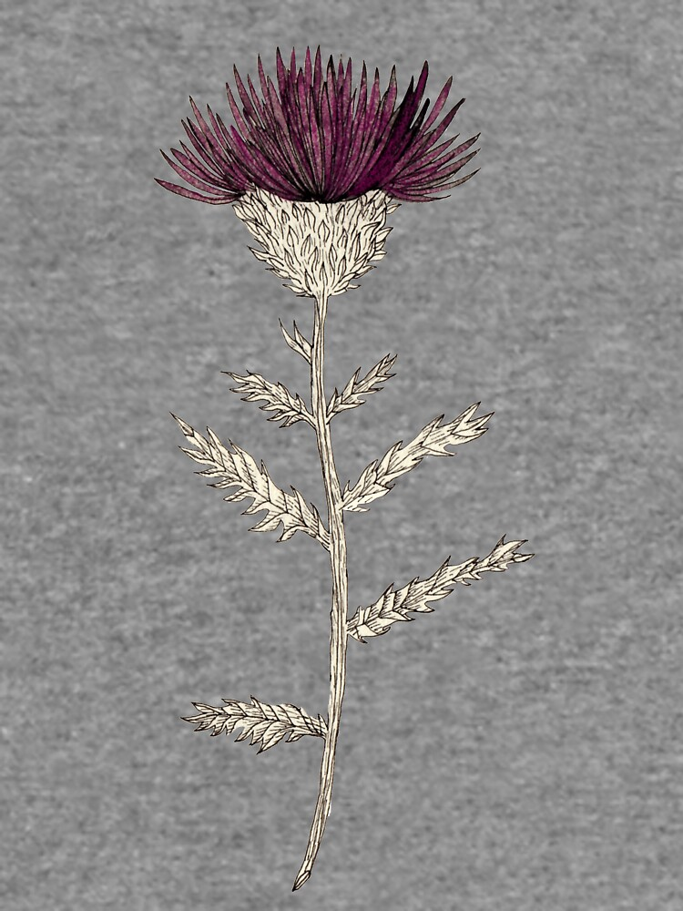 Cardoon by spoto