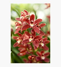 Orchid Red Photographic Print