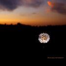 Dandy sunset by PJS15204
