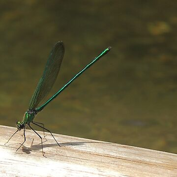 dragonfly by metrognome
