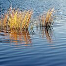 shimmer-reeds by Jan Stead JEMproductions