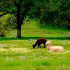 Spring Pastures by Barbara  Brown