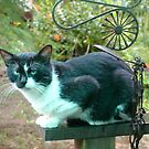 My Best Friends Cat by NomadicGoddess