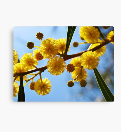 Yellow balls Canvas Print