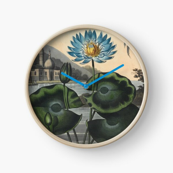 Botanical illustration: Blue Egyptian water lily by Robert Thornton – State Library Victoria Clock