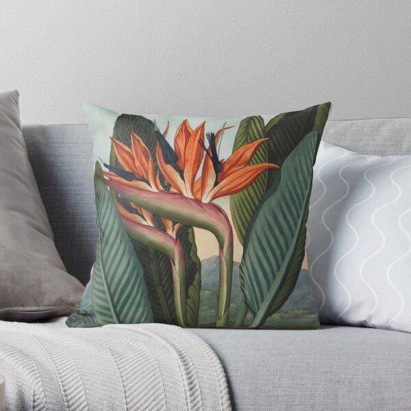 Botanical illustration: Bird of Paradise (Strelitzia) – State Library Victoria Throw Pillow