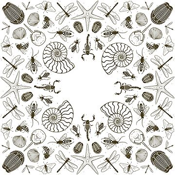 Invertebrate Fossil Bandana Design by MaryCapaldi