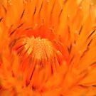 Dandelion  by Alexander Mcrobbie-Munro