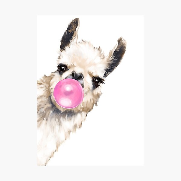 Sneaky Llama with Bubble Gum Photographic Print