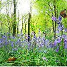 Memories of Spring by Morag Bates