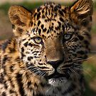 Amur Leopard cub by SWEEPER