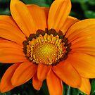 Big Orange by jackitec