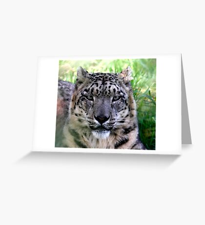 Ranshan the Snow Leopard Greeting Card