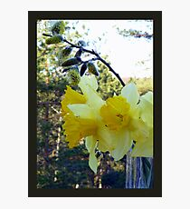 Easter Flowers Photographic Print