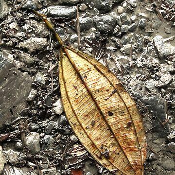 Autumn leaf by Elefje
