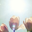 Spring Flare by Kristybee