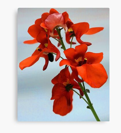 Diascia - Flirtation Orange Canvas Print