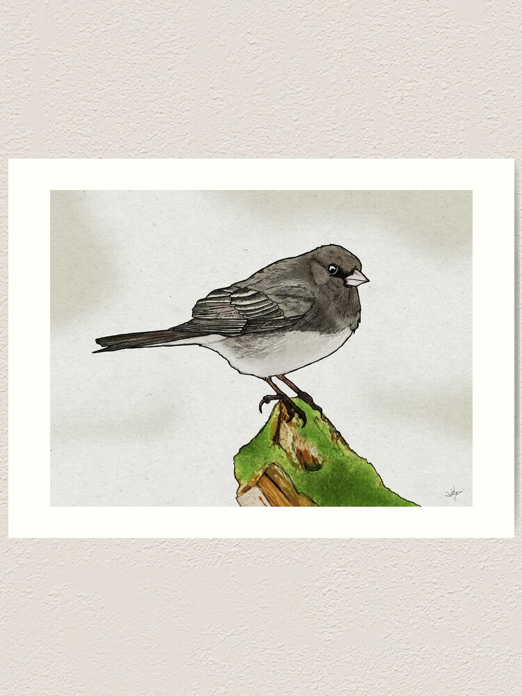 Alternate view of Dark-eyed Junco Art Print