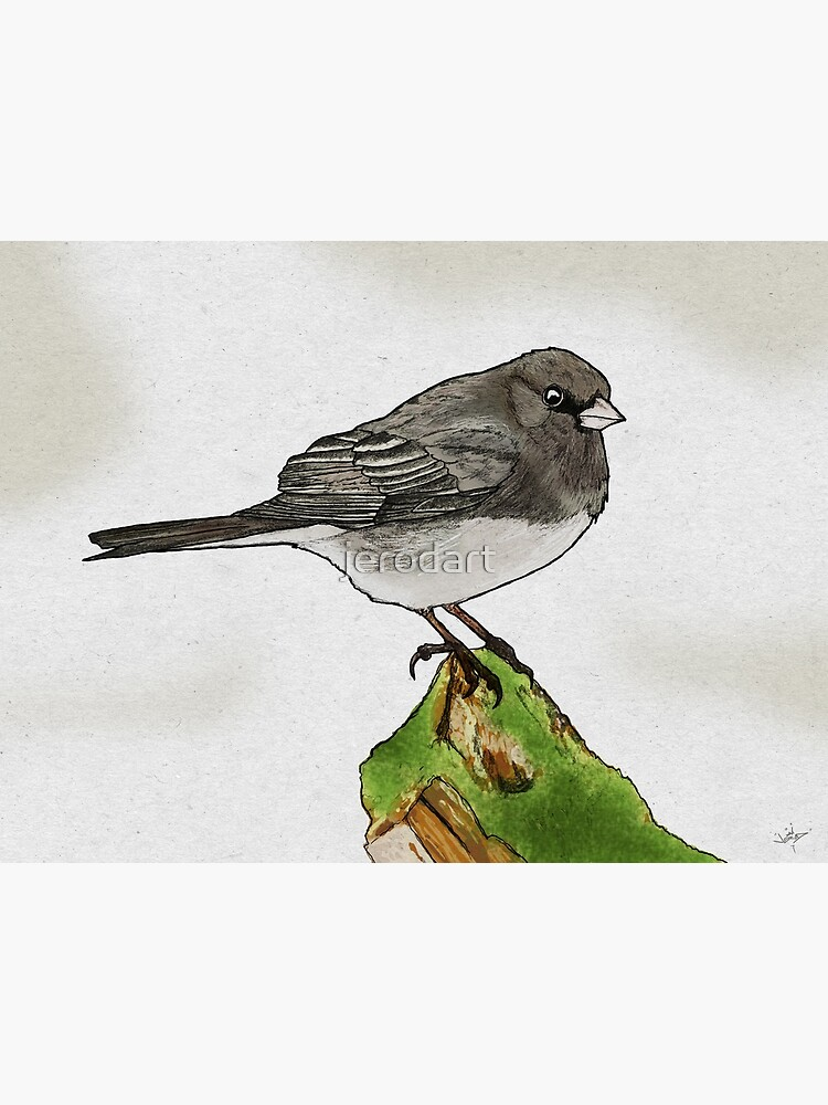 Dark-eyed Junco by jerodart
