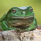 Contented Frog by Greg Carlill