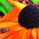Yellow Snail Flower by sailorsedge