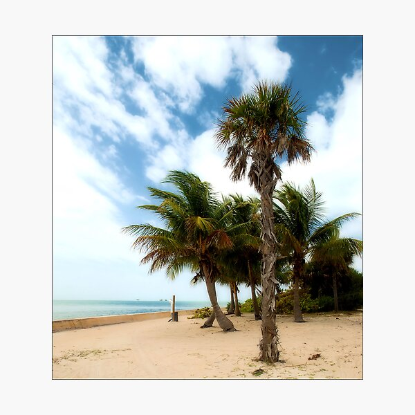 Cabbage & the Coconut Photographic Print
