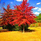 Autumn is here by Kasia  Kotlarska