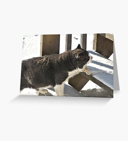 Old Cat Going Up Greeting Card