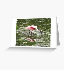 """A Spoonbill seasonally """"in the Pink"""" Greeting Card"""