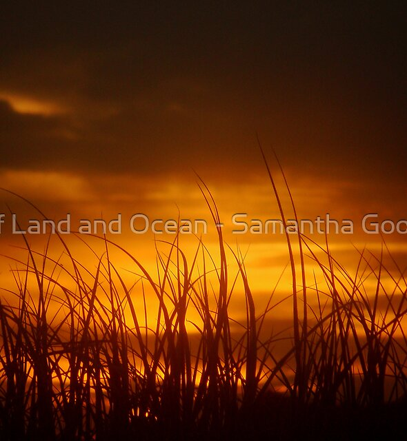Grass of the Sand Dunes, North Coast, NSW, Australia by Of Land & Ocean - Samantha Goode