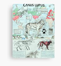 CANUS LUPUS Canvas Print