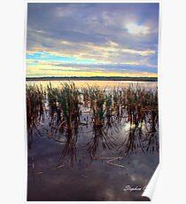 Herdsman lake Poster