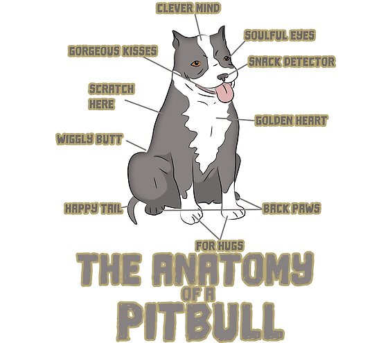 anatomy of a pitbull funny dog posters by creativestrike redbubble