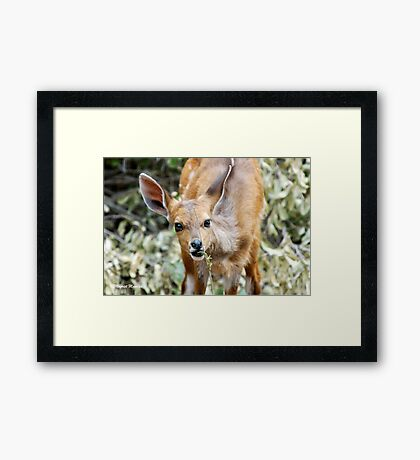 THIS IS NICE - THE BUSHBUCK - Tragelaphus scriptus Framed Print
