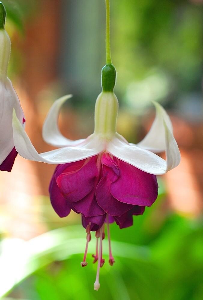 Fab Fuchsia by Penny Smith