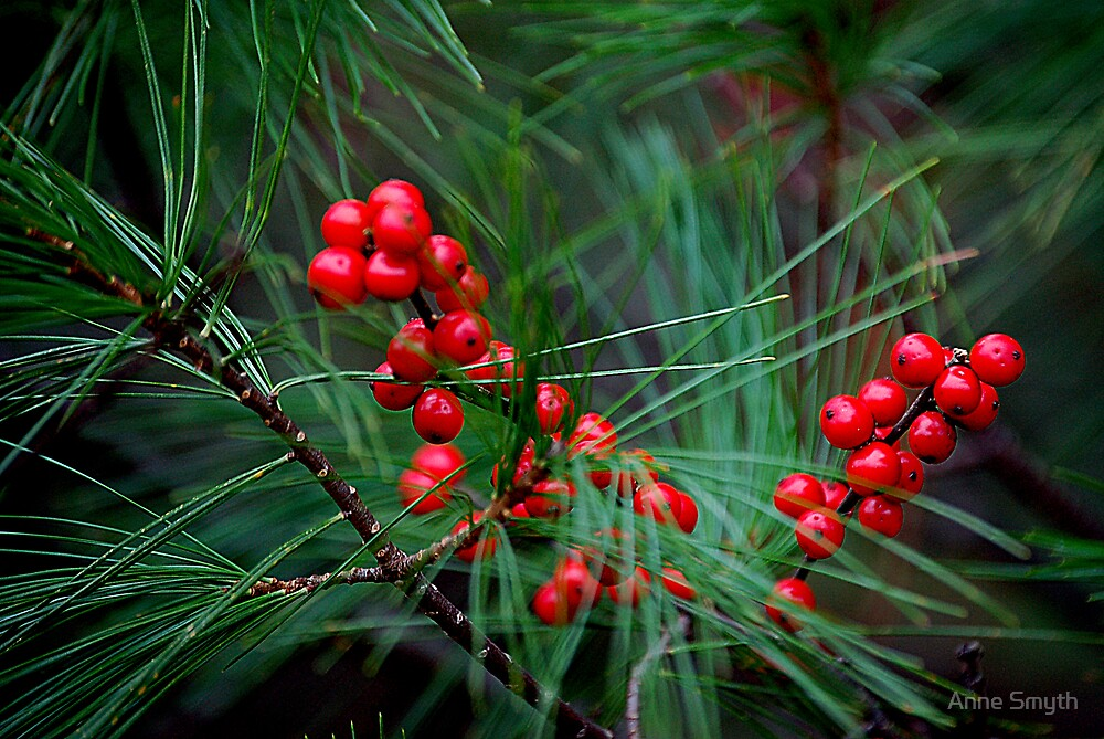 Winterberries 1 by Anne Smyth