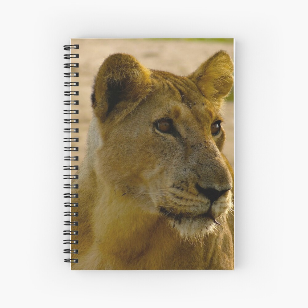 pregnant lioness relaxed Spiral Notebook