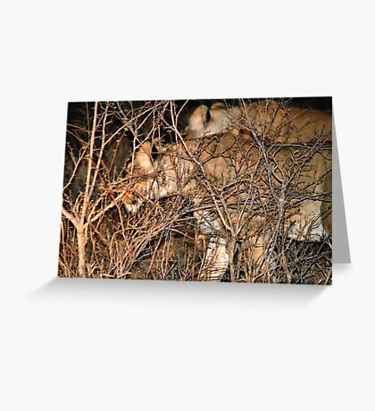 THE FEMALES AND THE HUNT Greeting Card
