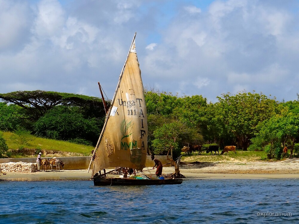 Lamu Island - TAIFA - wooden fishing dhows off Lamu Island - colour by exploramum