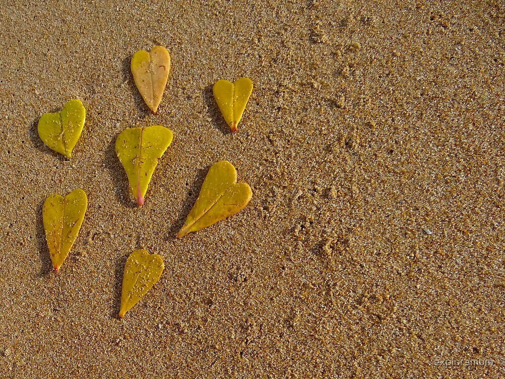 Leaves of love - close up by exploramum