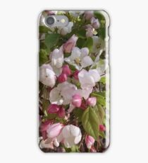 Spring Blossoms #4 iPhone Case/Skin