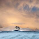 The Setrah Hill Tree at Bassenthwaite in the English Lake District by Martin Lawrence